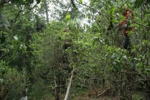 trees-870-004
