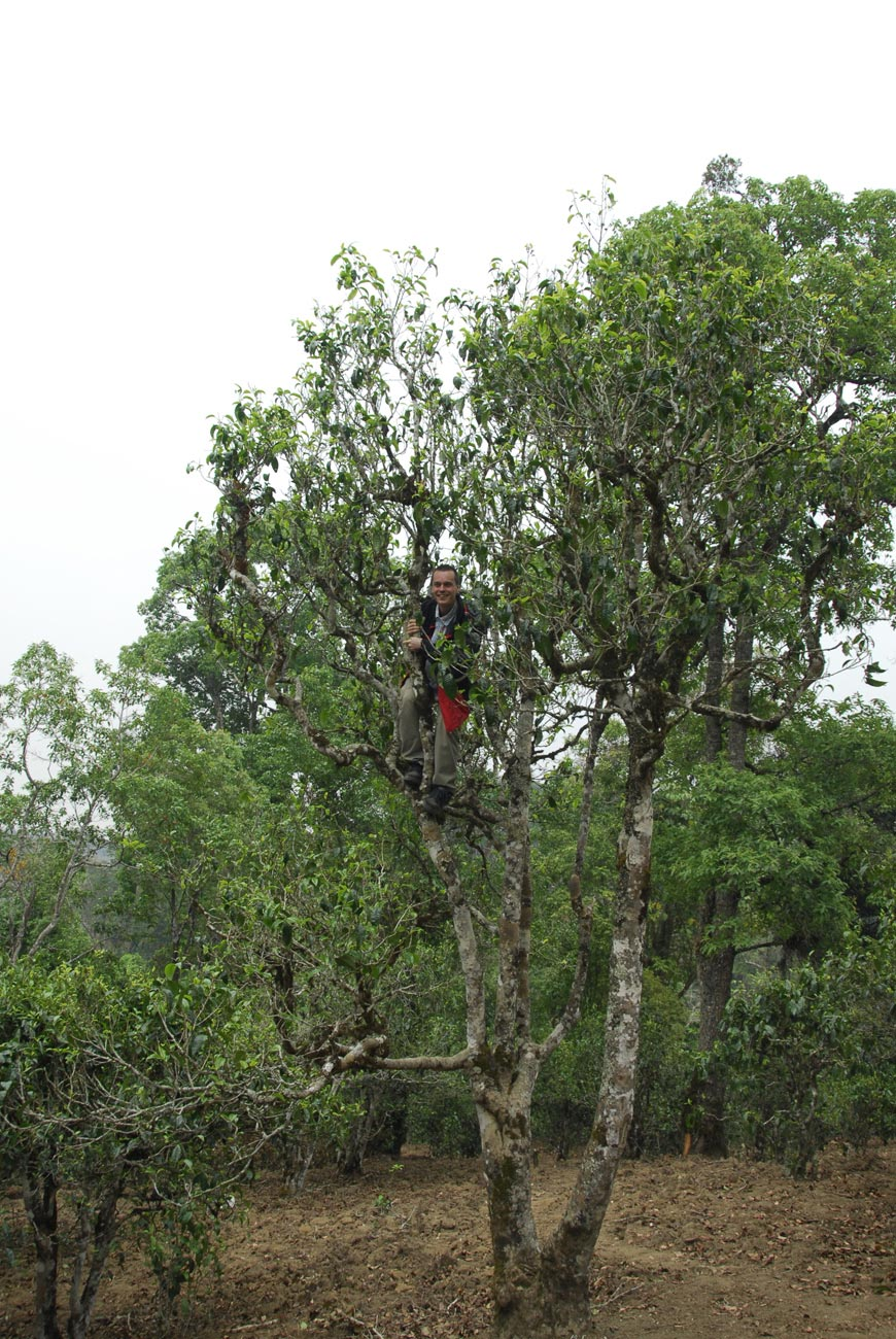 Jeden z divokých stromů