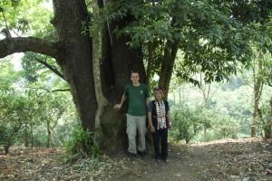 trees-870-008