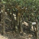 trees-870-009